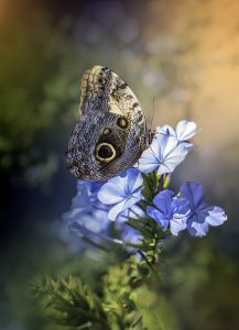 butterfly, insect, flowers