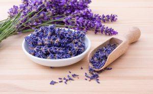 lavender, herbs, flowers