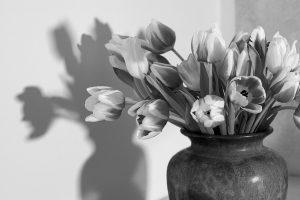 tulips, flower vase, black and white